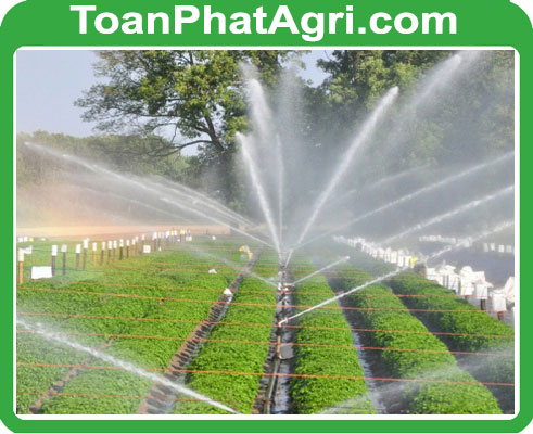 /public/media/files/Video-du-an-tuoi-tieu-Toan-Phat-Agri.jpg